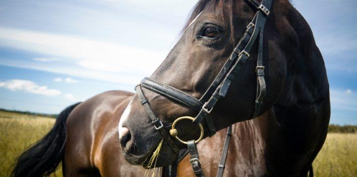 Jak dbać o konia?