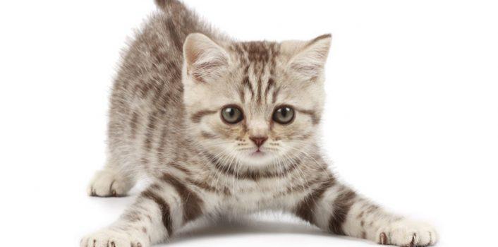Jak zadbać o swojego kota?