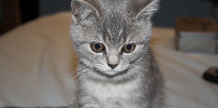 Jakie szczepienia są zalecane dla małych kotów?